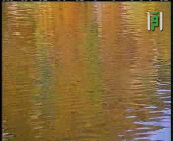العلم والايمان - المشاؤون على الماء- الدكتور مصطفى محمود