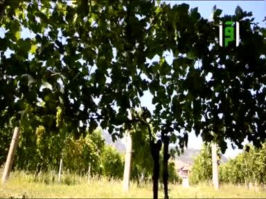 فلسطين ارض و حكاية الجزء الثاني - ح 12- قرية فقاقيس