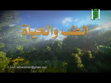 الطب والحياة  - ح 83- الكبد 3-3 -الدكتور زهير السباعي