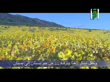 أشعار عبد الرحمن العشماوي - قصيدة طائر الربيع