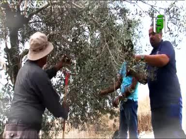 فلسطين ارض وحكاية - طول كرم