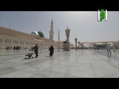 تقارير في رحاب الحرمين -مكتبة المسجد النبوي