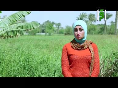 بلاد الكنانة - المصور الشخصي لجمال مصر