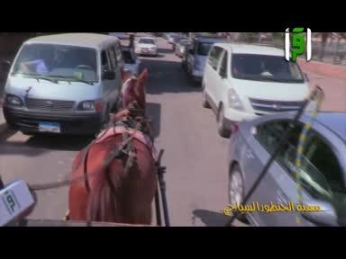 بلاد الكنانة - مهنة الحنطورالسايحي