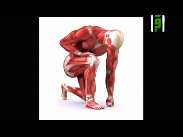أصناف العضلات في جسم الإنسان