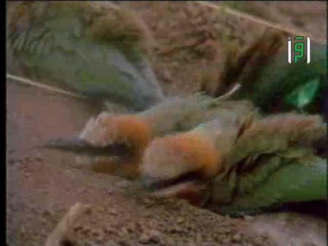 كيف تعتني الطيور بنظافتها