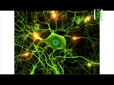الطب والحياة -97-الهرمونات3-3 - الدكتور زهير السباعي