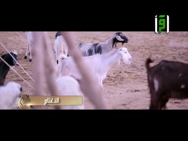 مع النبي صلى الله عليه وسلم-ح8-الأغنام