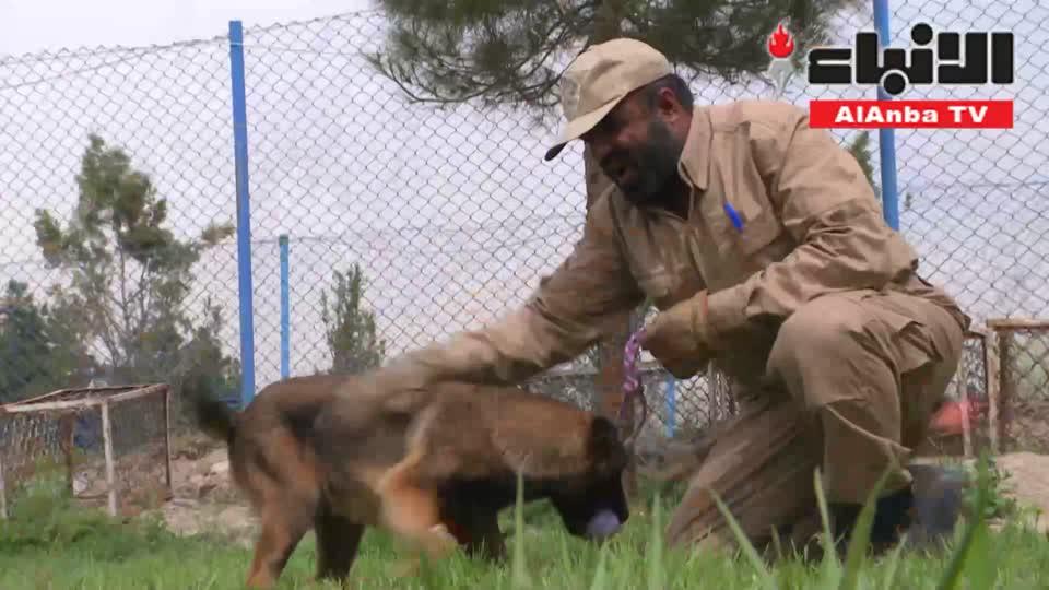 الكلاب المدربة أفضل صديق للأفغان بمكافحة الألغام