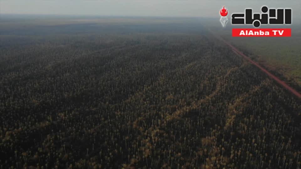 الحرائق تواصل التهام الأمازون في ظل القمة الأممية حول المناخ