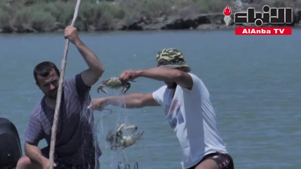 السلطعون الأزرق عدو صيادي الأسماك اللدود في ألبانيا